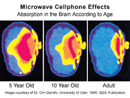 cell-phone-absorption